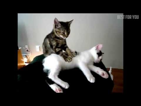 These cats will make you laugh funny video