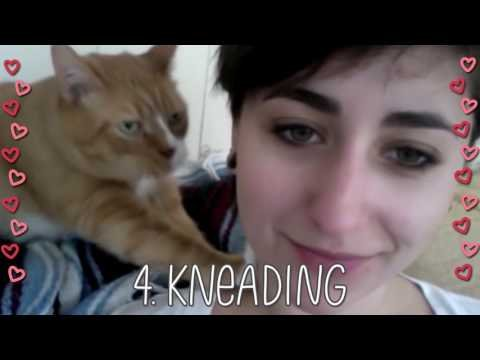 5 Ways Your Cat Shows You Love!
