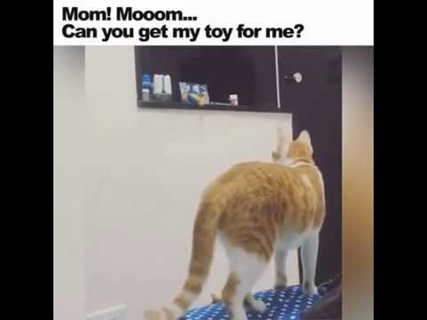 Mother cat taking care of baby cat needs!!!