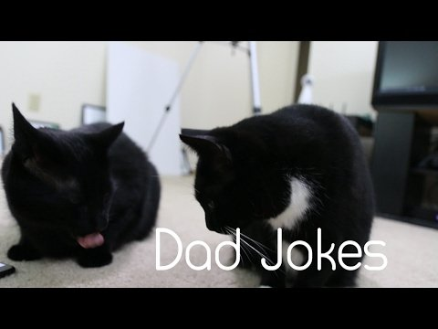 Telling Dad Jokes To My Cats