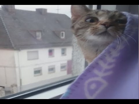 Cat Wakes Up From A Nap