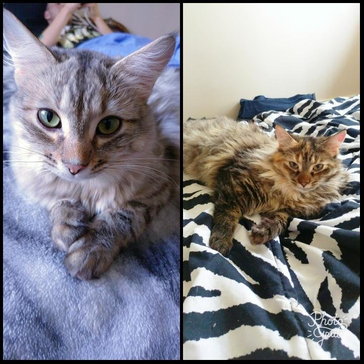My two awesome cats. Couldn't have better pets.