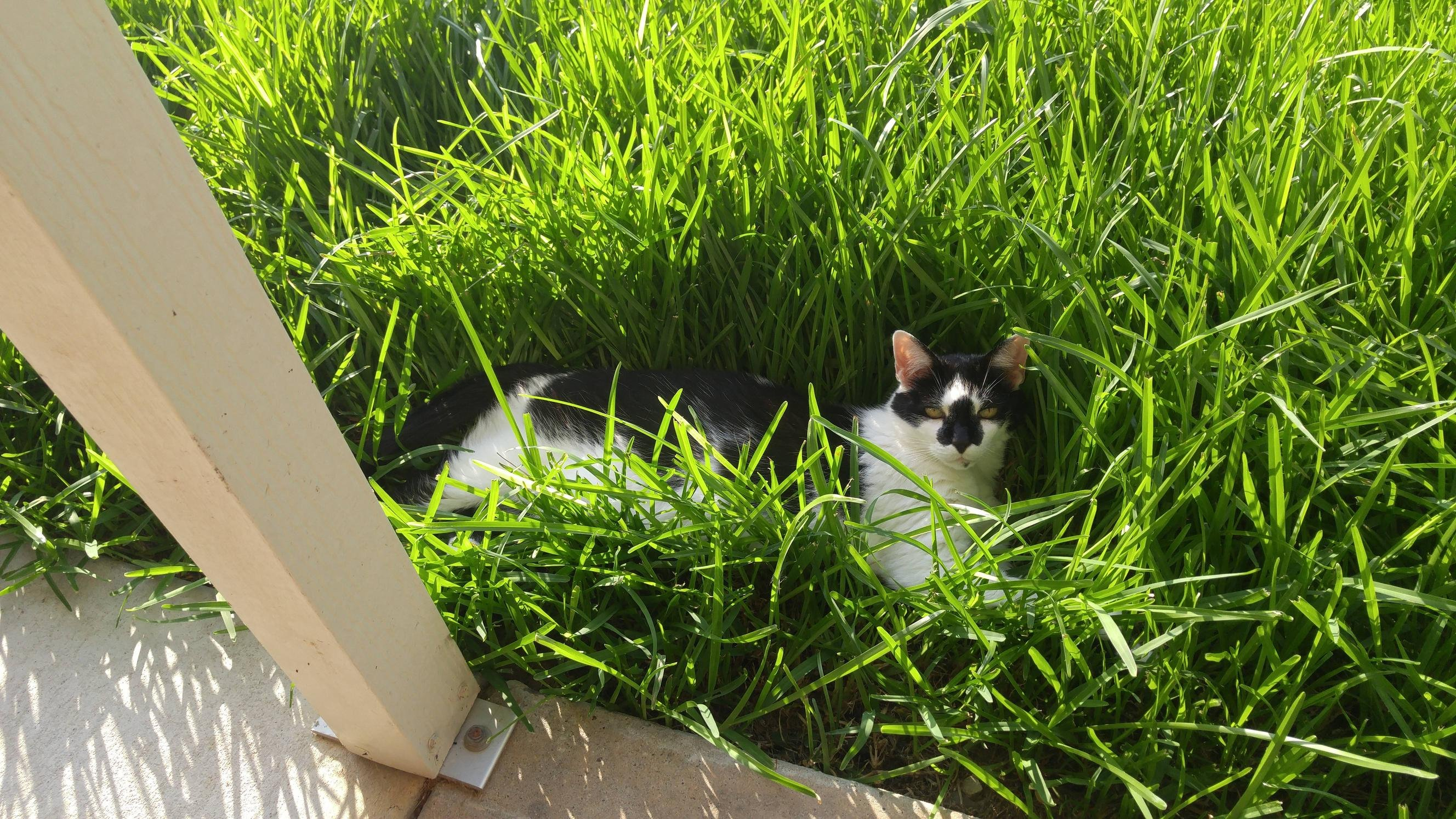 If the grass fits, I sits.