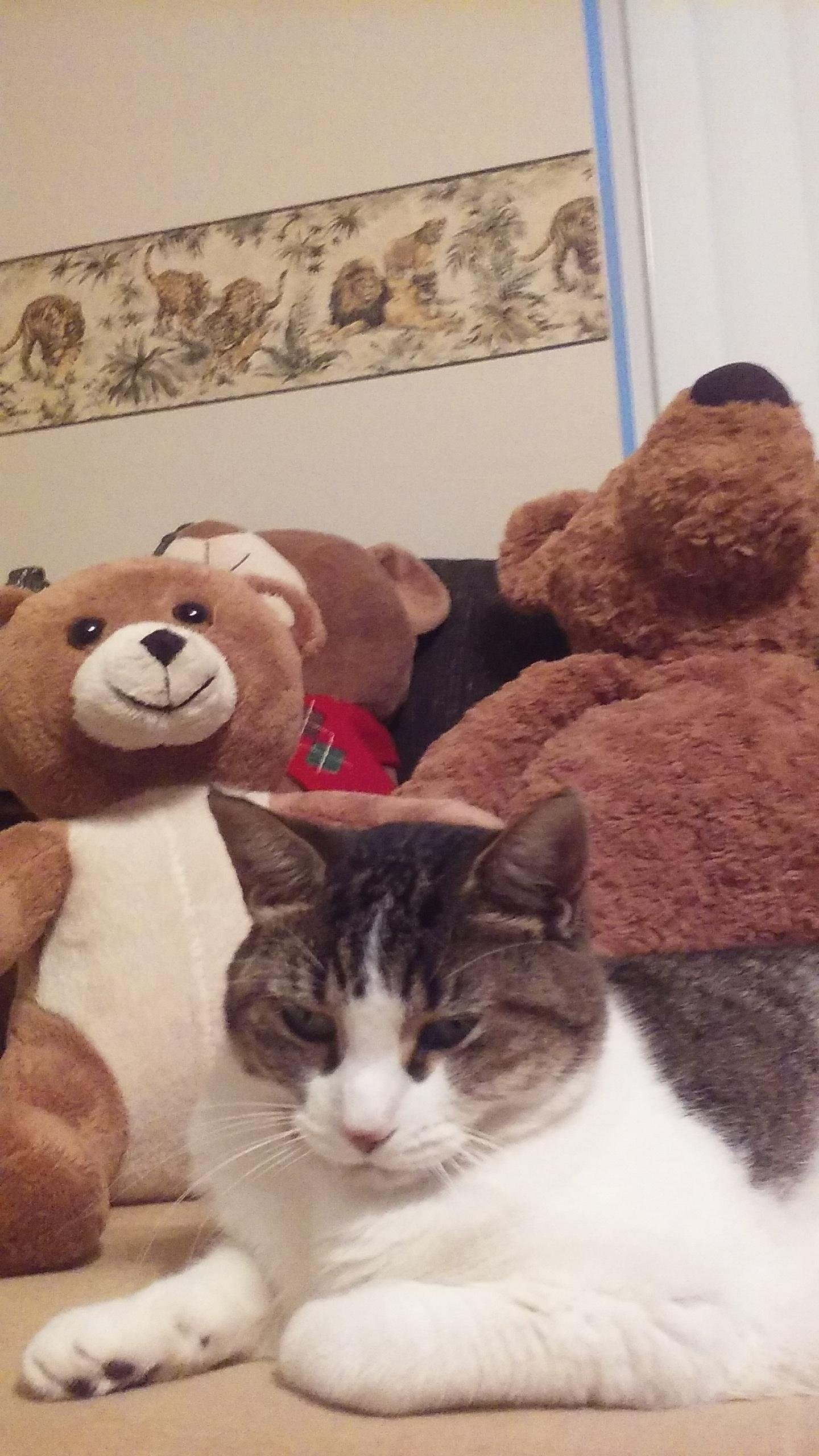 Unimused with the teddy bears